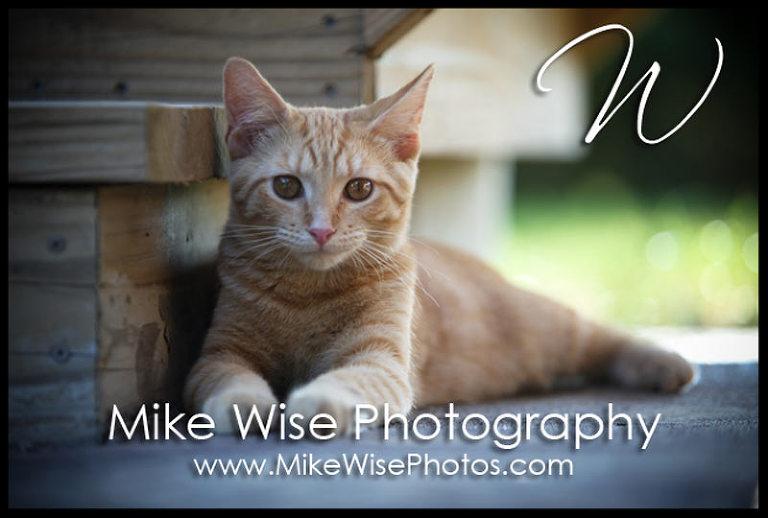wisephotos-9